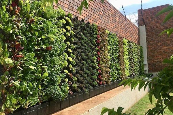 انواع Green Wall