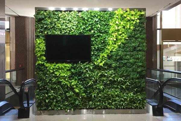 درباره دیوار سبز